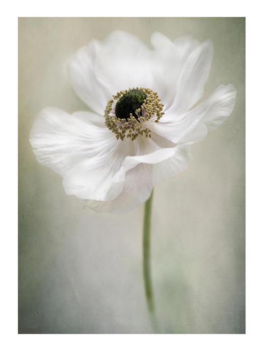 Poster Single White