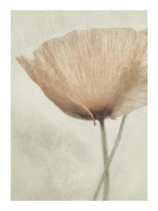 Poster Flower Jewel 40x50