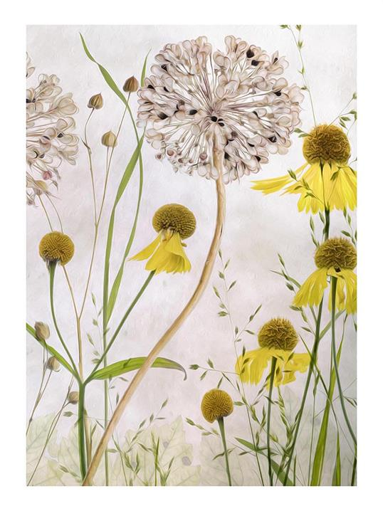 Poster Alliums and Heleniums III 70x100