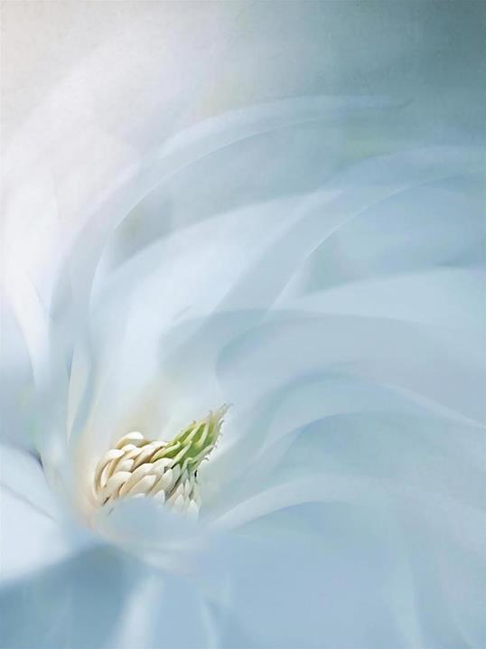 Poster Floral Ballet 30x40