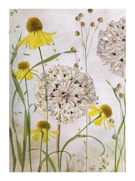 Poster Alliums and Heleniums 30x40