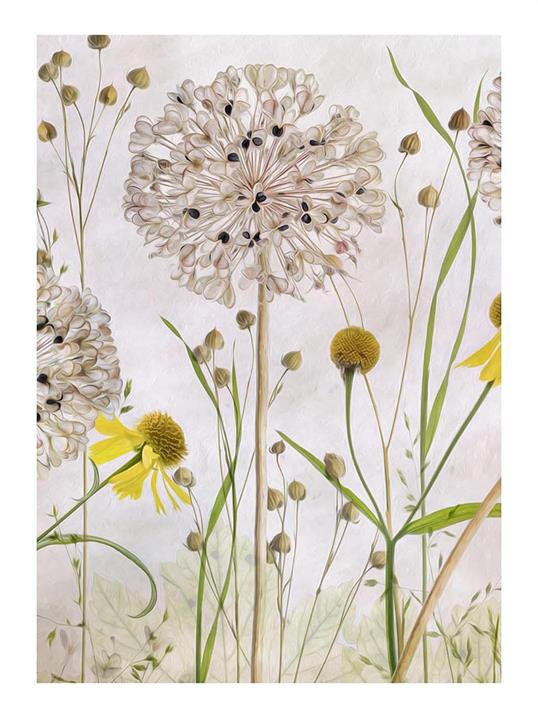 Poster Alliums and Heleniums II