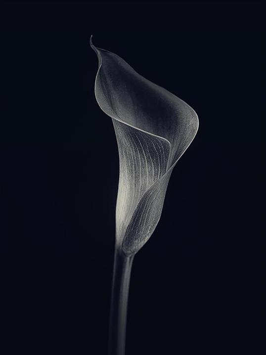Poster Alone 50x70