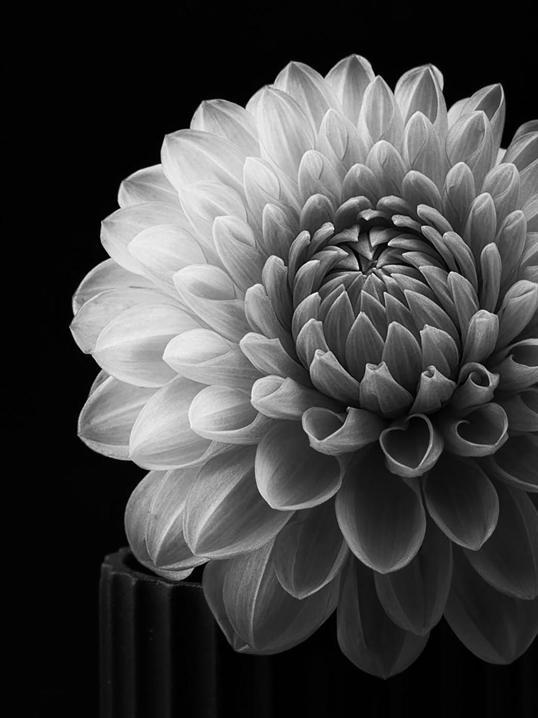 Poster White Flower 70x100