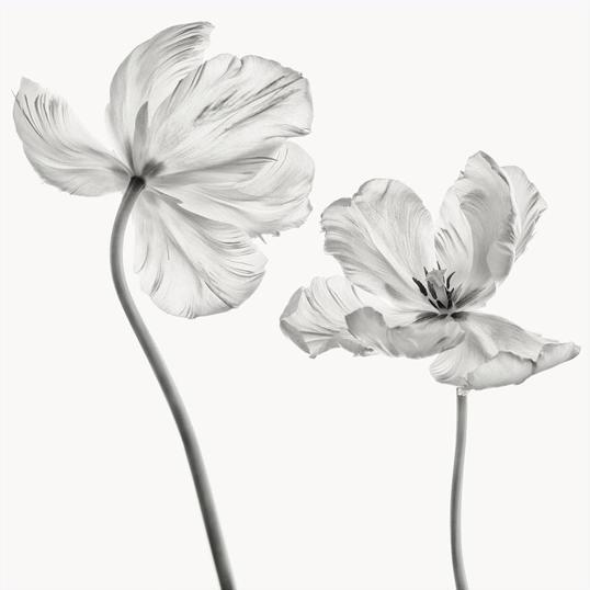 Poster Flower Friends