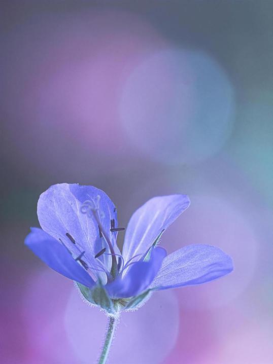 Poster Flower Pastell 50x70